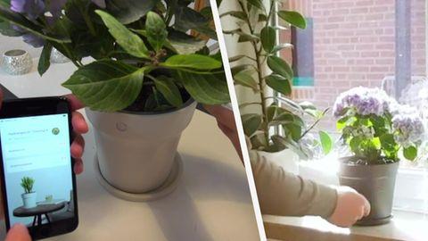 Smarter Blumentopf im RTL-Test