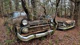 Bäume wachsen aus der Motorhabe dieses abgestellten Ford, Baujahr 1955.