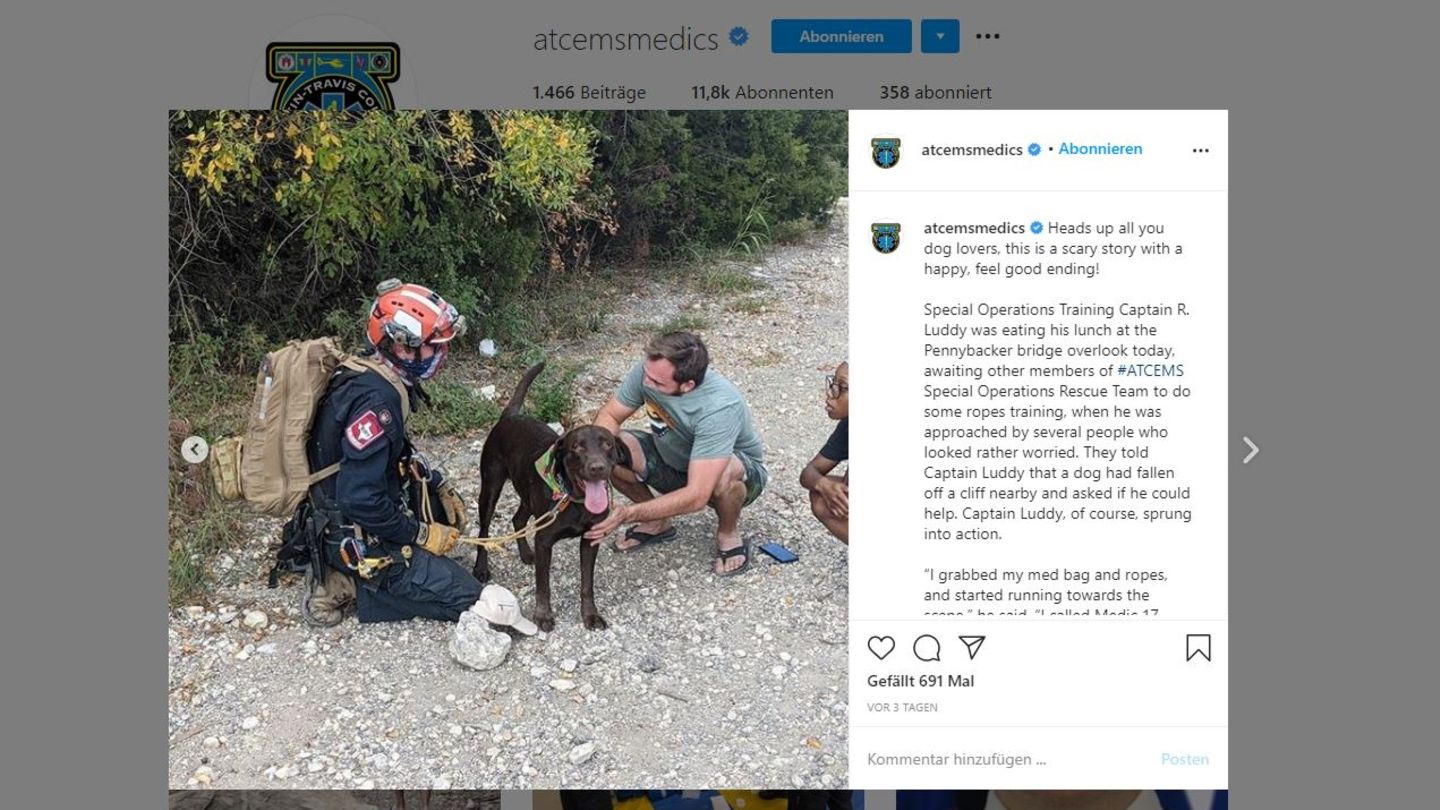 Labrador Stout in Instagram-Post des Austin-Travis County EMS (Taxas)