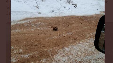 Russland: Mitten auf der Straße in der Stadt Kirensk liegt ein menschlicher Schädel