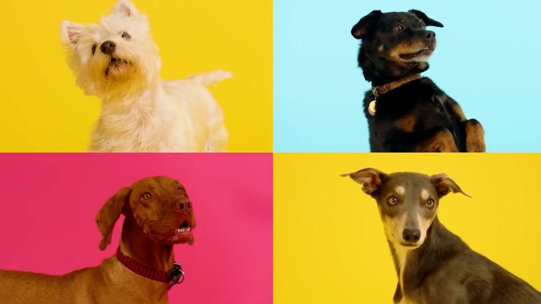 Social-Media-Erfolg-Erste-Weihnachts-Single-nur-f-r-Hunde-So-lustig-reagieren-die-Vierbeiner-auf-den-Hundesong