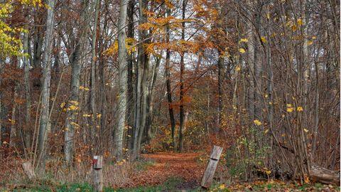 In diesem Waldstück in Berlin wurden die Knochen des vermissten Monteurs gefunden