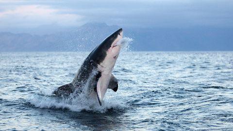 News vom Wochenende – Hai tötet Mann in Australien