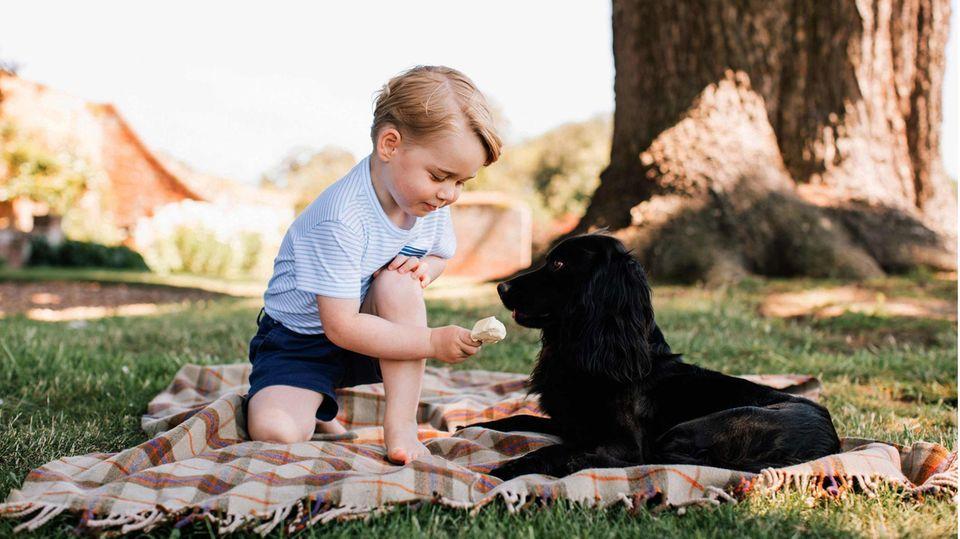 Prinz George und Familienhund Lupo im Sommer 2016
