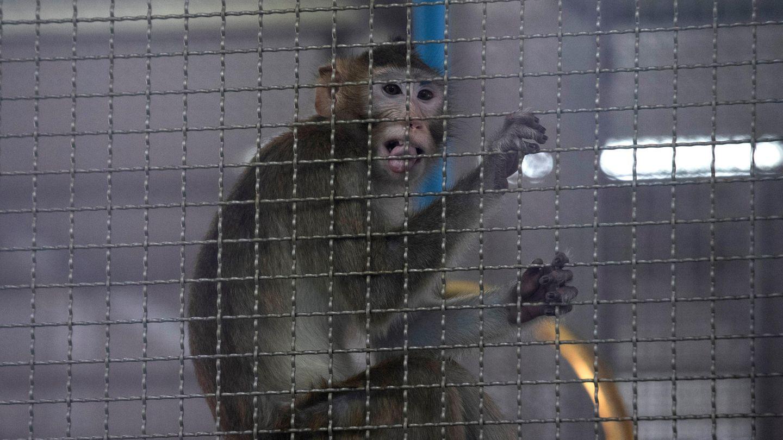 Streit um Tierversuche zu Forschungszwecken in Baden Württemberg