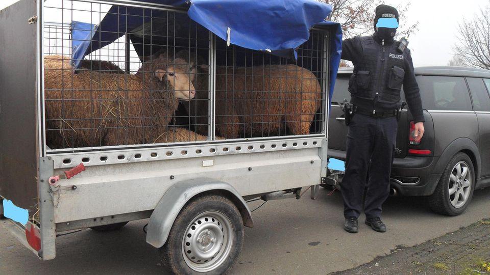 Schafe Anhänger