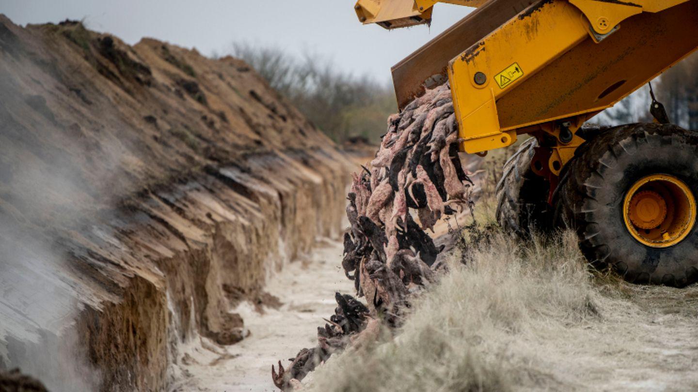 Tote Nerze werden von einem LKW in einen Graben gekippt.