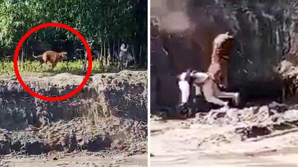 Tigerangriff in Indien