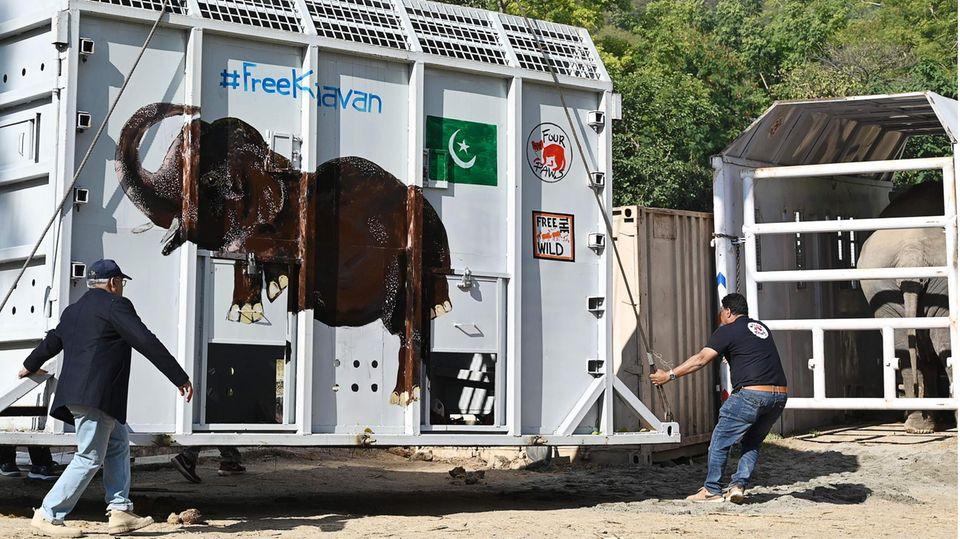 Die Transportbox für den Elefanten Kavaan