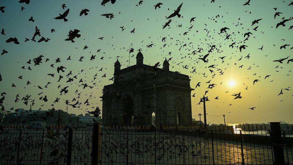Mumbai, Indien: Das Gateway of India in Mumbai ist an sich schon eine berühmte Sehenswürdigkeit in der indischen Hafenstadt, doch wenn bei Sonnenaufgang noch mal hunderte Vögel den Morgenhimmel bevölkern, ist der Momentnoch mal um einiges eindrucksvoller