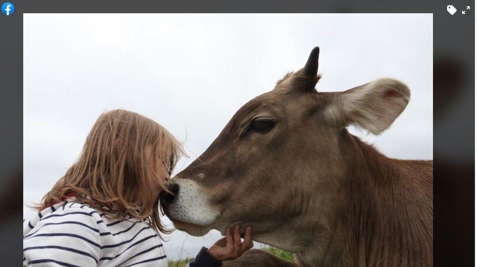 Jetzt Zugochse statt Schlachtvieh:der Stier Goofy und eine Schülerin