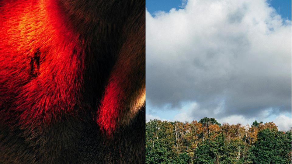 Lnks: ein Pferdehals; rechts: Wald und Himmel