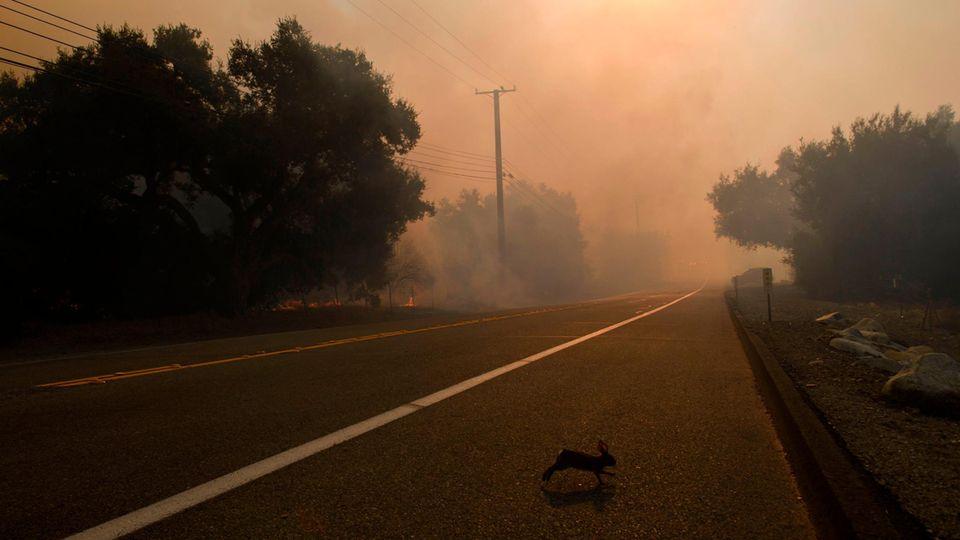 Ein Kaninchen läuft über eine Straße, im Hintergrund ist roter Nebel zu sehen