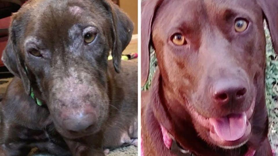 Links ein  magerer Hund mit struppigem Fell, rechts der selbe Hund mit glänzendem Fell