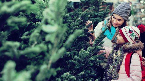 Weihnachtsbaum: Warum eine Plastiktanne ökologischer ist als ein echter Tannenbaum