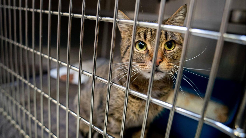 Eine ausgesetzte Katze sitzt in ihrem Käfig im Tierheim.