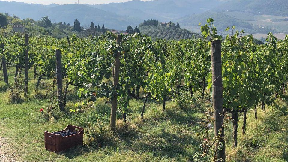 Weinlese in Italien