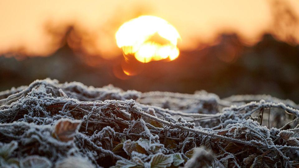 Morgensonne über gefrorenem Bode