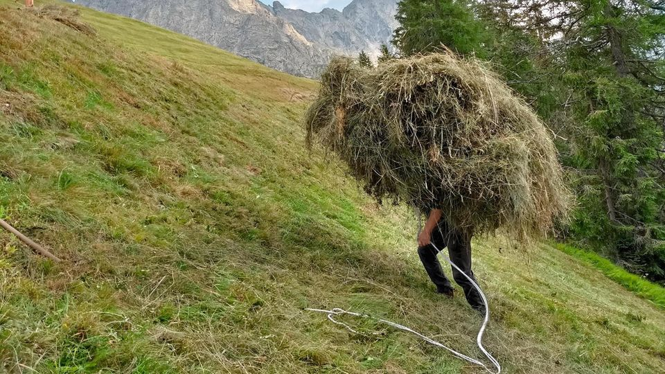 Tragende Rolle: Der Verein Freiwillige Arbeitseinsätze EO vermittelt Helfer, die bei der Heuernte von Südtiroler Bergbauern mit anpacken