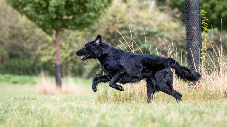 Polen: Blinder Hund läuft 25 Kilometer zu seinem Pfleger