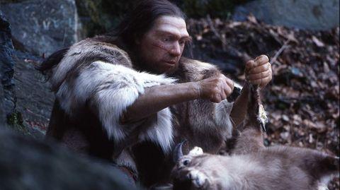 Die Neandertaler konnten keine Wintervorräte anlegen