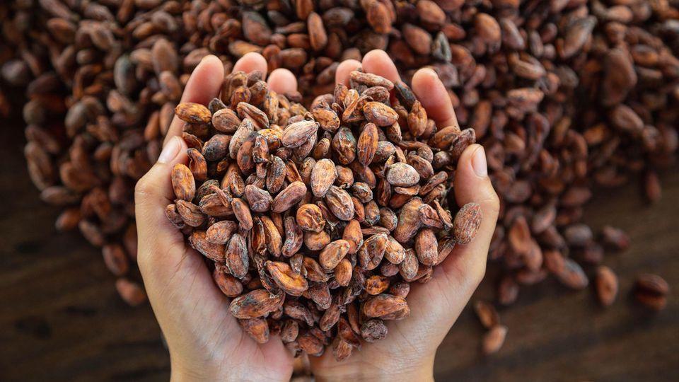 Nachhaltige Produktion: Kakao, der auch den Produzenten gut tut: Darauf sollten Sie beim Kauf von Schokolade achten