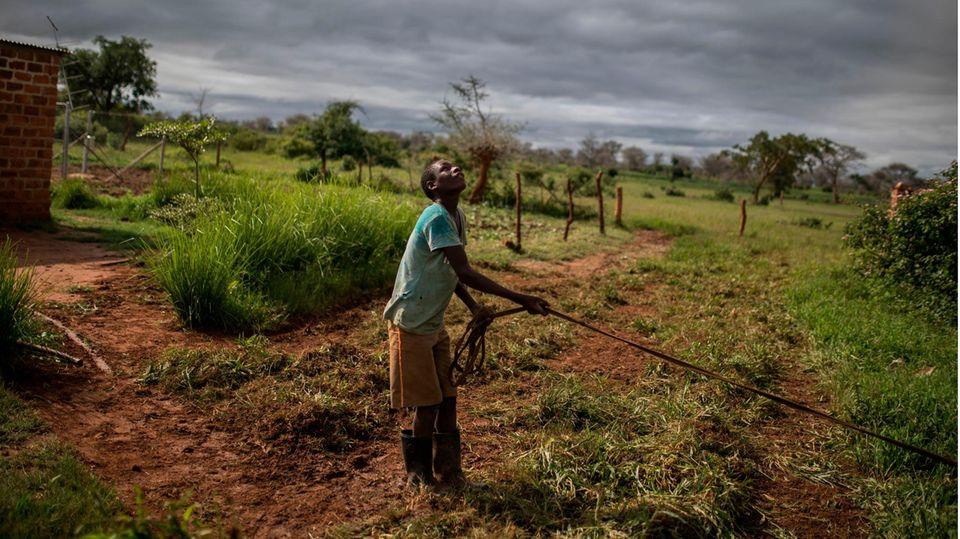 Platz 10: Sambia  Sambia gehört zu den Ländern, die die Hauptlast der globalen Klimakrise tragen:10,1 Millionen Menschensind aufhumanitäre Hilfe angewiesen. Die Temperaturen sind seit 1960 um etwa 1,3 Grad Celsiusgestiegen, während die jährliche Niederschlagsmenge um durchschnittlich 2,3 Prozent pro Jahrzehnt zurückgegangen ist. Dazu kommen aufeinanderfolgende Dürreperioden, Heuschreckenplagen und Überschwemmungen.Die Folgen dessen sind besonders verheerendfür den Agrarsektor und die Lebensmittelversorgung im Land:Im Juli 2020 benötigten 2,6 Millionen Menschen in Sambia dringend Nahrungsmittelhilfe.